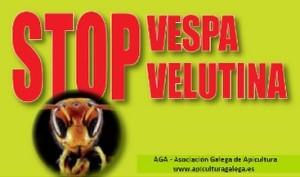 stop-vespa-velutina