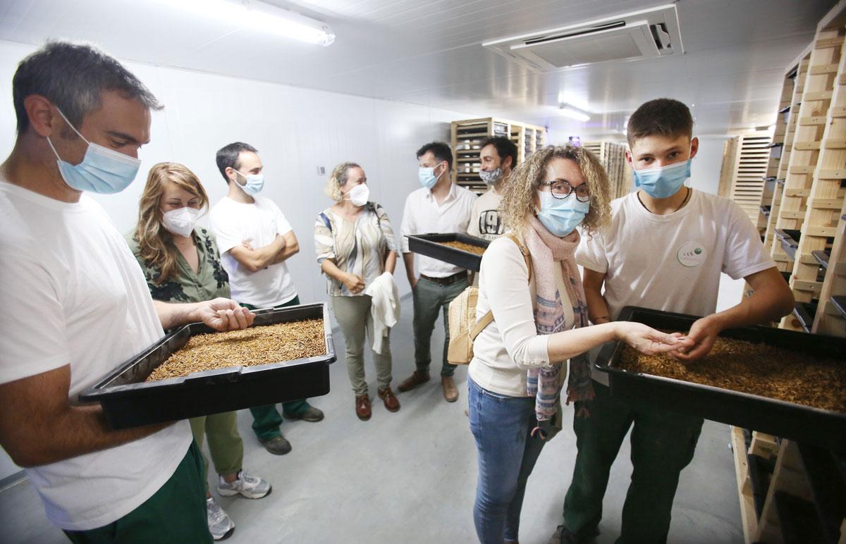 O Concello apoia a unha empresa ponteareá pioneira en Galicia na cría de vermes