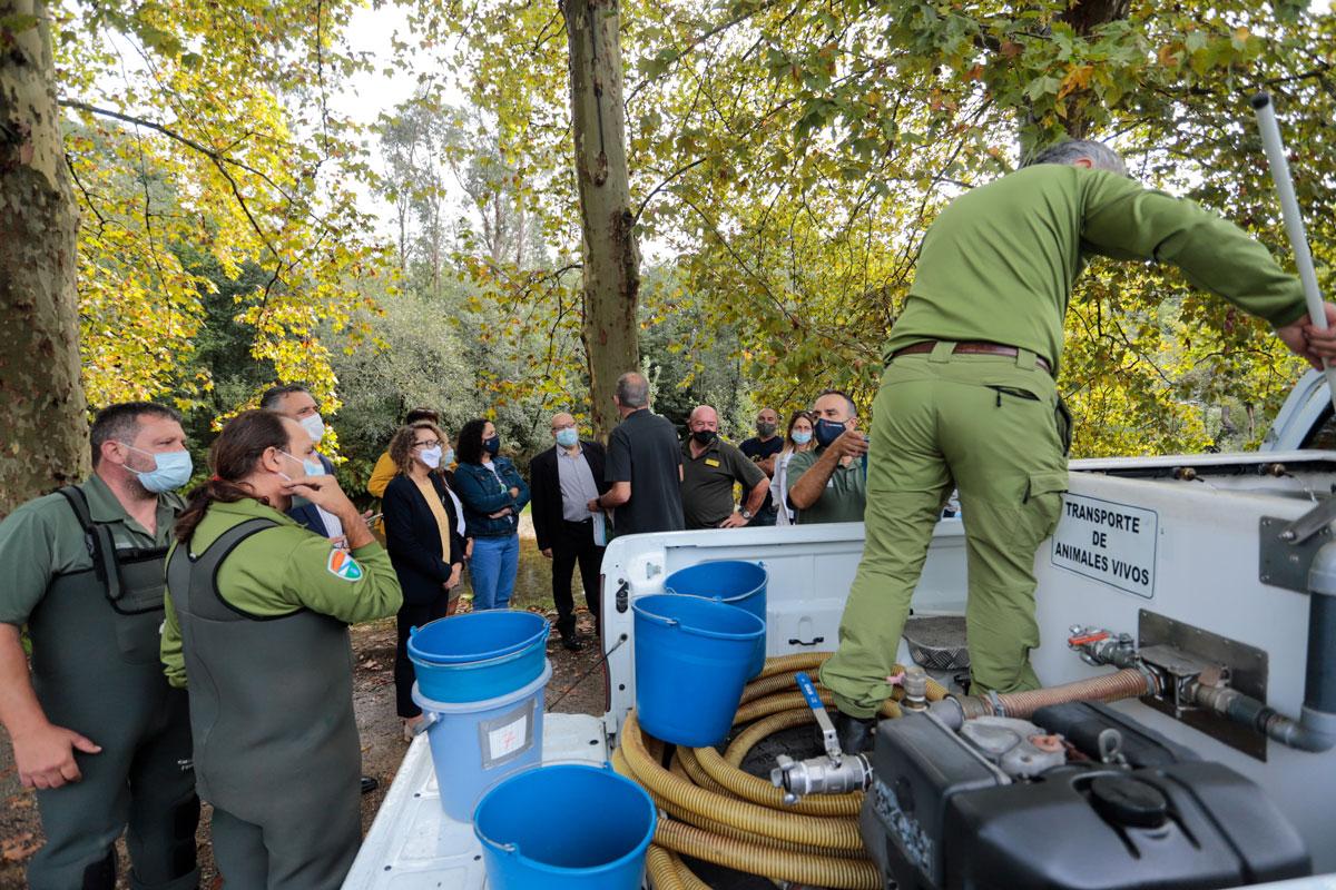O río Tea acolle unha solta de alevíns de salmón ao abeiro do proxecto Migramiño